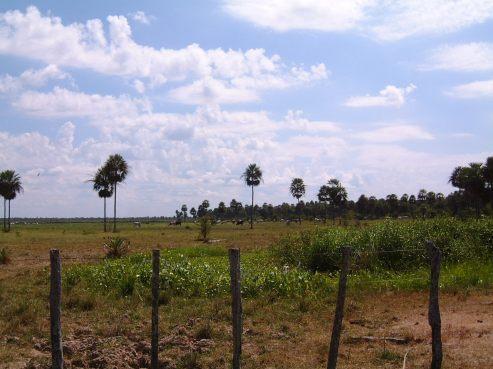 Chaco_Paraguay_cattleranch2.JPG